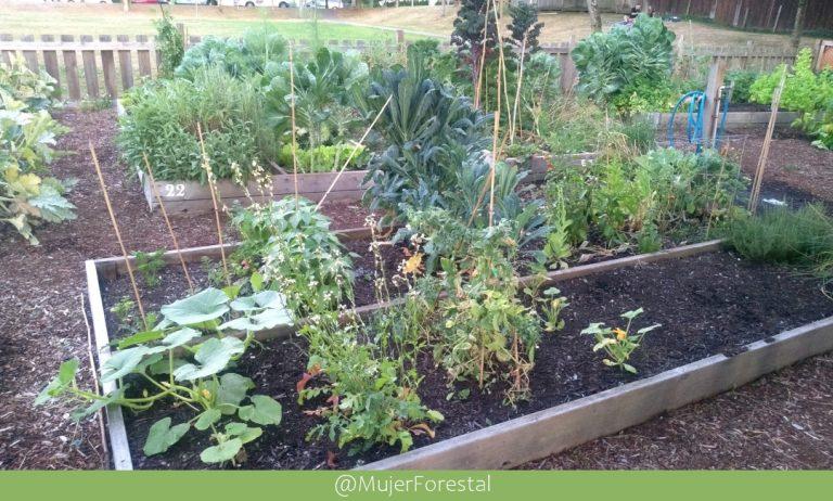 Huertas y Jardínes Comunitarios en Vancouver – Canadá