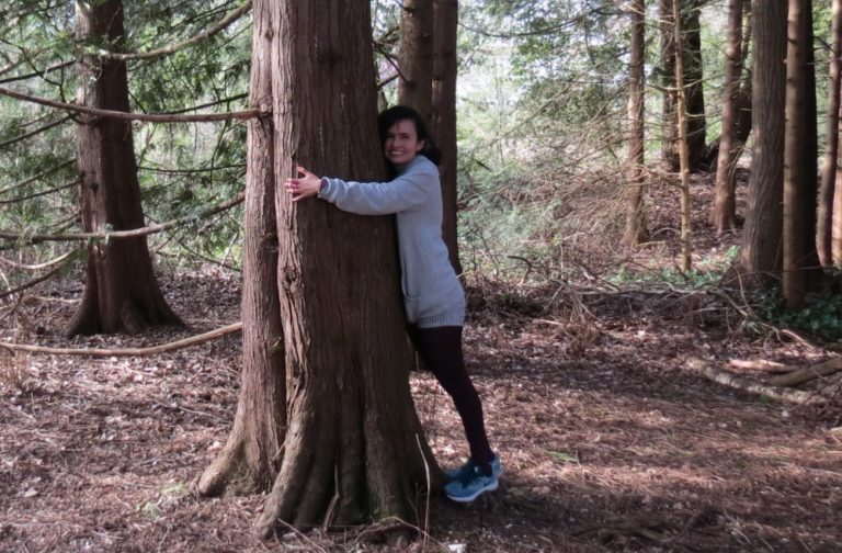 El poder de los árboles en nuestro bienestar